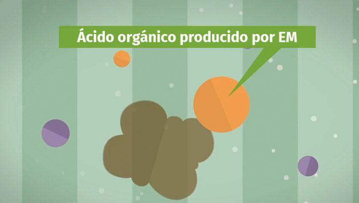 microorganismos efectivos en el hogar