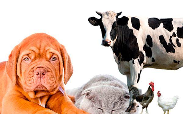 productos animales de granja y mascotas